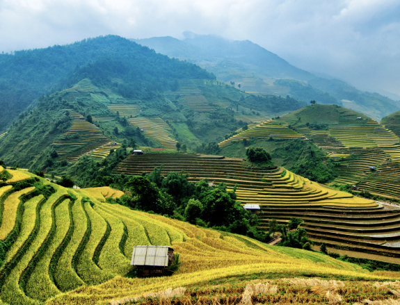 Visum voor Vietnam aanvragen